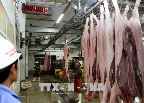 越南首次成功向国外出口猪肉 hinh anh 2