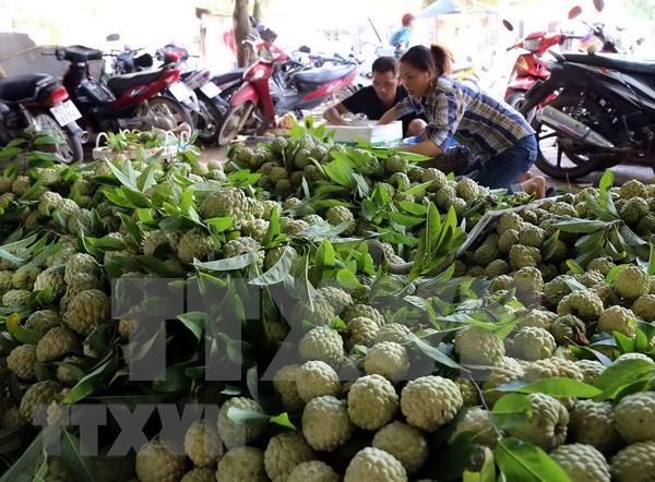 越南蔬果出口猛增 中国仍是巨大出口市场 hinh anh 2