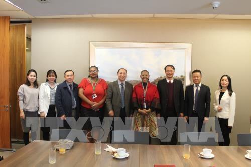 越南与南非力争2020年双边贸易额达15亿美元 hinh anh 2