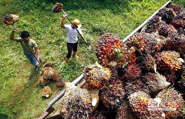 今年5月份印尼出口呈猛增态势 hinh anh 1