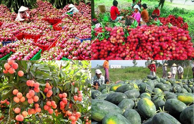 扩大越南水果对中国出口 hinh anh 1