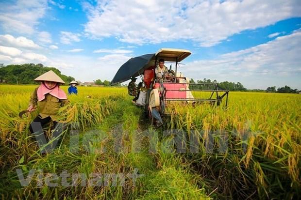 今年上半年农业国内生产总值创下10年来新高 hinh anh 2