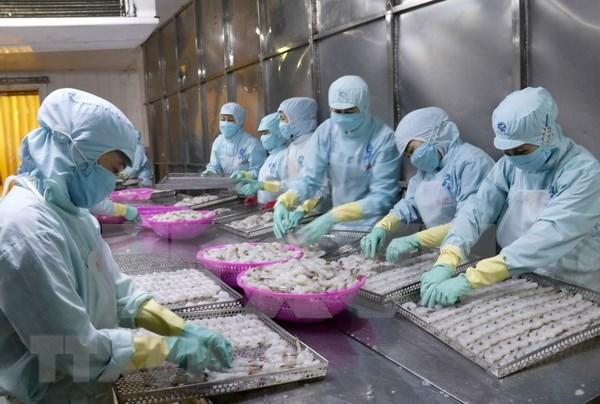 中国可成为越南最大水产品进口国 hinh anh 1