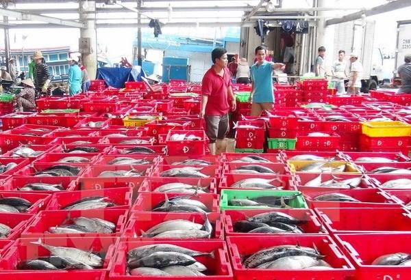 中国可成为越南最大水产品进口国 hinh anh 2