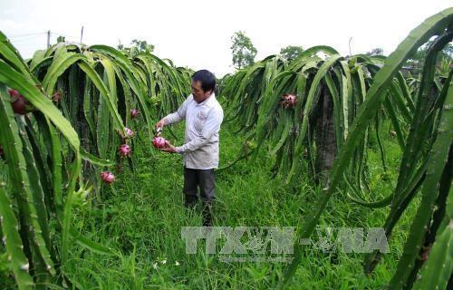 台湾企业与越南进行农业投资合作活动 hinh anh 1