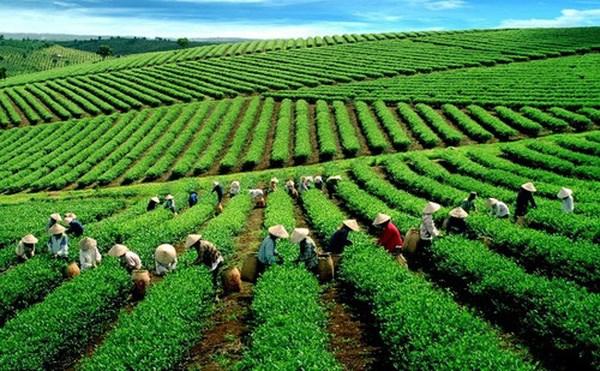 美中贸易战对越南农业有什么影响? hinh anh 1