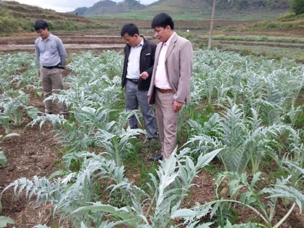 河江省管簿县开发与利用药材资源来提高居民生活水平 hinh anh 1