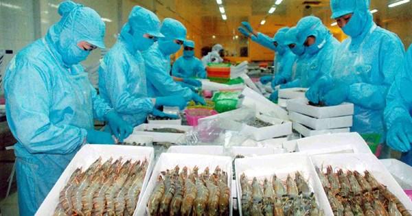 从第三季度末越南虾类价格有望反弹 hinh anh 1