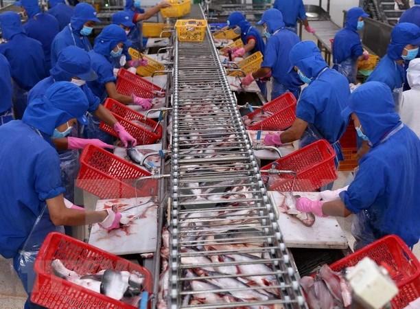 VASEP:越南应加强对出口到中国的查鱼产品质量的监管 hinh anh 1
