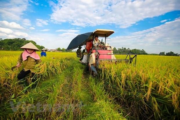 越南农业之画:出现许多亮色 hinh anh 1