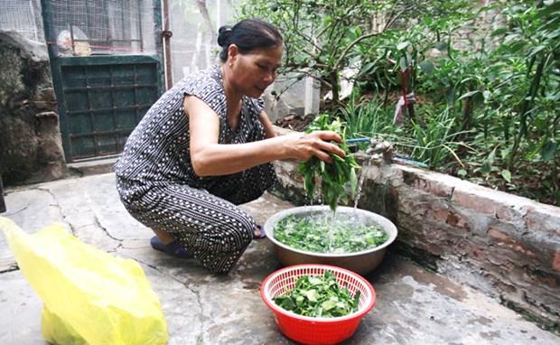 河内市52%农村居民用上安全水 hinh anh 1