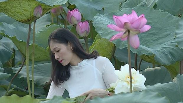 莲花给人一种美的享受,让人赏心悦目 hinh anh 3