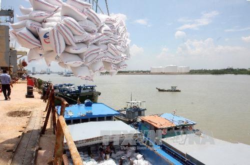 越南一私企中标向韩国出售6万吨糙米 hinh anh 1
