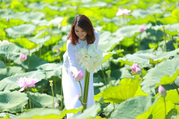 莲花给人一种美的享受,让人赏心悦目 hinh anh 4