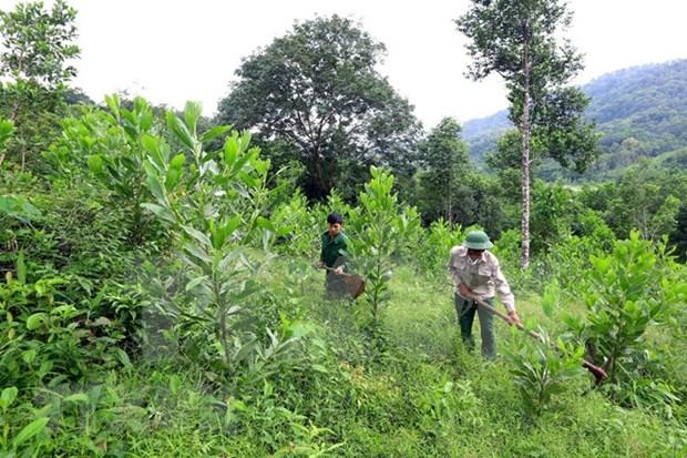 全国补植林地面积为5.6952万公顷 hinh anh 1