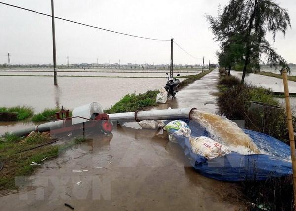 各省继续开展第三号台风后救灾工作 hinh anh 1