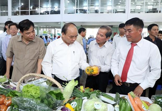 政府总理阮春福探访林同省绿色蔬菜生产模式 hinh anh 2