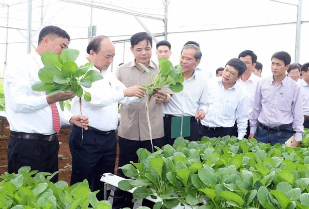 政府总理阮春福探访林同省绿色蔬菜生产模式 hinh anh 1