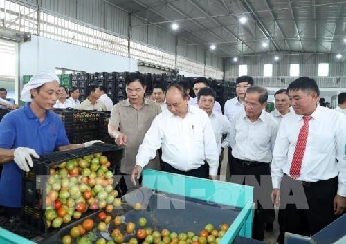 越南政府总理阮春福: 将大叻市打造成为东-西文化的象征 hinh anh 1