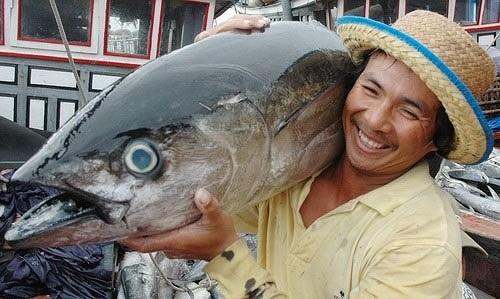 今年上半年越南金枪鱼出口增速反弹 hinh anh 1