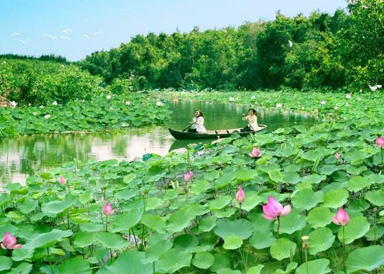 同塔省下决心把旅游业发展成为促进经济增长的支柱产业 hinh anh 1