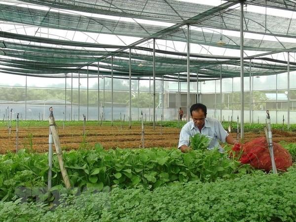 越南大力吸引对农业的投资 hinh anh 1