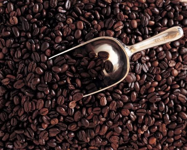 前7月阿尔及利亚自越南进口咖啡总量猛增 hinh anh 2