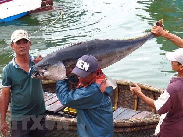 越南中部以南地区沿海各省积极实施《渔业法》并多措并举解除欧盟IUU黄牌警告 hinh anh 1