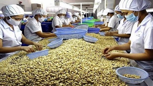 着力提高越南农产品价值 hinh anh 1
