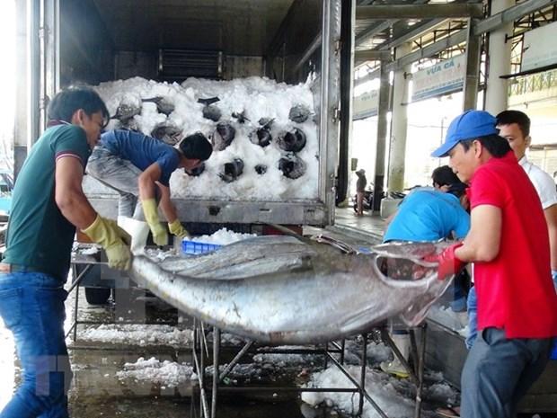 2018年前7月越南金枪鱼出口额达3.51亿美元 增长11% hinh anh 1