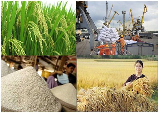 越南大米生产和加工基地颇受中国企业的好评 hinh anh 1