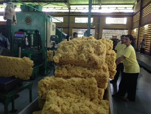 今年前7月柬埔寨橡胶出口增长20% hinh anh 1