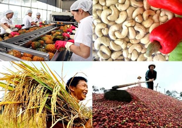 越南努力加大对欧盟市场农产品出口力度 hinh anh 1