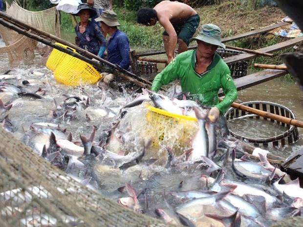 2018年前7个月越南查鱼出口达近12亿美元 hinh anh 1