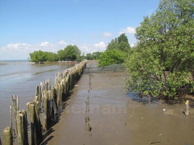 海岸带生态系统可持续发展与保护经验交流研讨会在河内举行 hinh anh 1