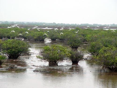 海岸带生态系统可持续发展与保护经验交流研讨会在河内举行 hinh anh 2