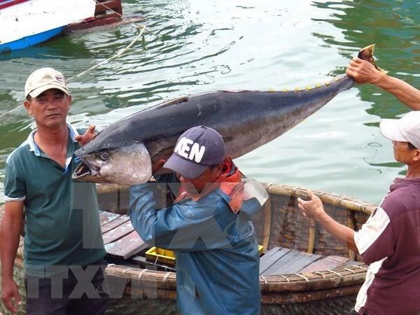 越南出台关于支持远洋捕捞业发展的题案 hinh anh 1