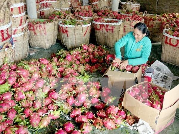 中国一直是越南农产品颇具潜力的市场 hinh anh 1