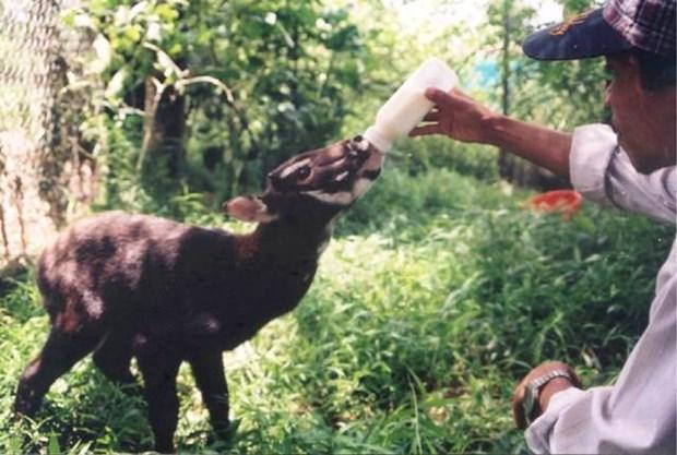 加强国际合作 促进濒危野生动物保护 hinh anh 1