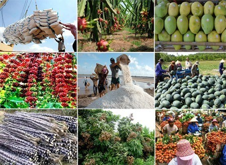 前8月越南农林水产品出口额达257亿美元 hinh anh 1