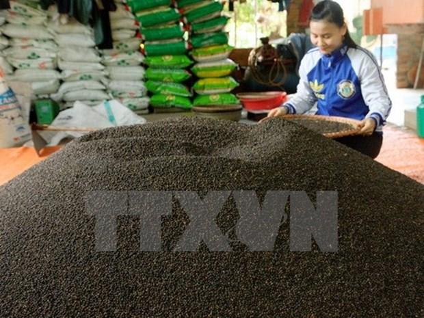 今年前8个月越南胡椒出口量增长3.2% hinh anh 1