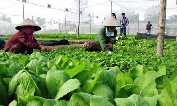 越南出台新法规助力有机农业发展 hinh anh 1
