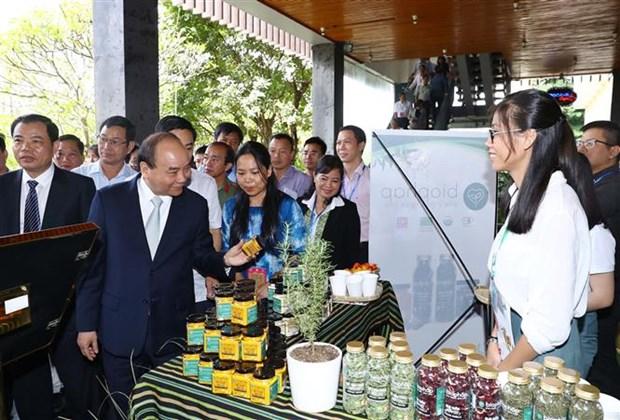 阮春福总理:像保护国家品牌一样保护玉玲人参品牌价值 hinh anh 2