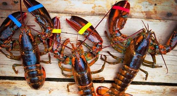 美国海产品在越南寻找销路 hinh anh 1