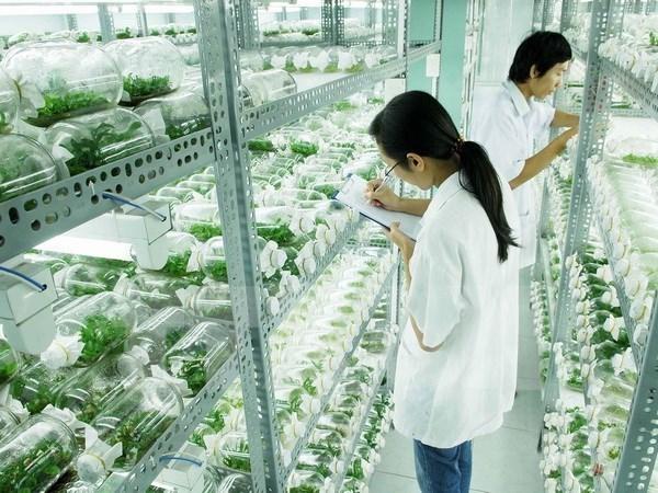 越南林同省高科技农业吸引外资额居全国第一 hinh anh 1