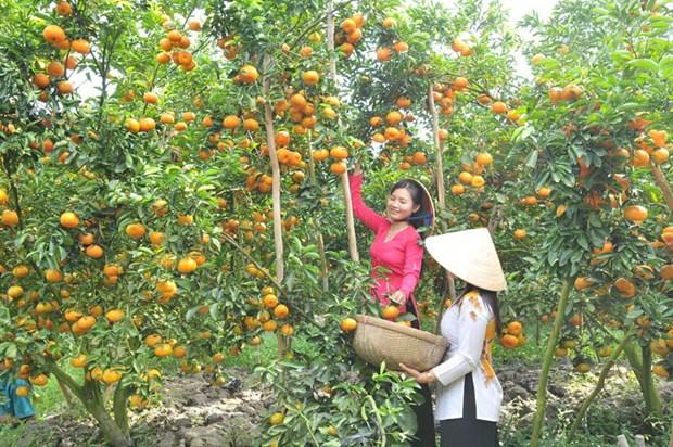 同塔省主动维护果树重点种植区 hinh anh 1