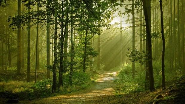 越南政府总理批准《森林可持续管理和森林认证提案》 hinh anh 1