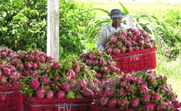 今年前9个月越南蔬果行业实现顺差31亿美元 hinh anh 1