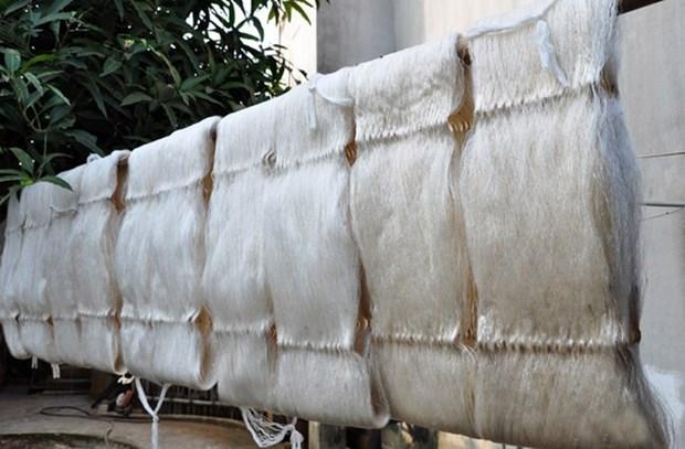 清化省绍化县的种桑养蚕业 hinh anh 3