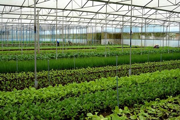 多国企业将越南视为智慧农业的投资乐土 hinh anh 1